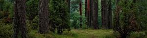 chrysalis-environmental-policy-2